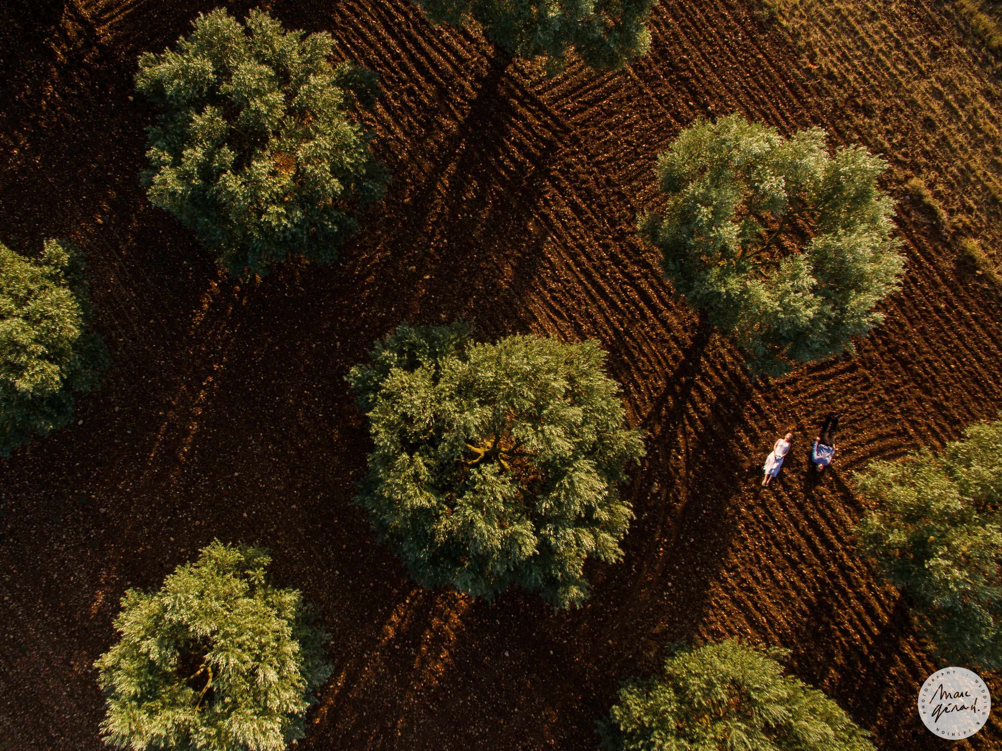 Photos de couple au drone au milieu des oliviers